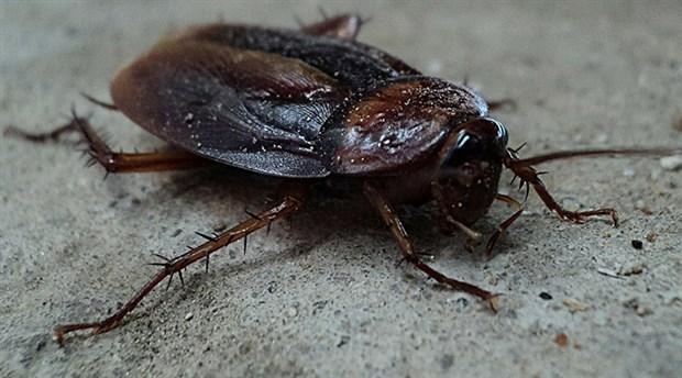 beylikdüzü böcek ilaçlama, böcek ilaçlama işlemi