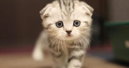 kedi psikolojisi, kedilerin huysuzluğu, kedinin psikolojik sorunları